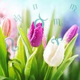 tulip flowers with zodiac sign symbols