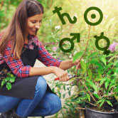 woman gardening and astrology symbols