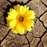 flower growing through dry earth