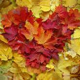 heart shaped fall leaves