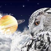 owl looking at saturn