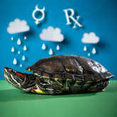turtle in rain