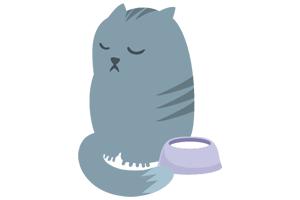 virgo cat