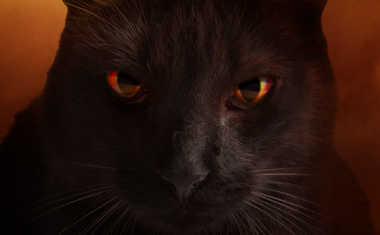 astrology superstitions black cat