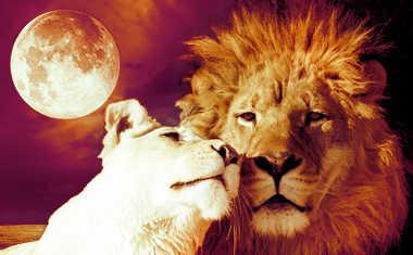 Weekly Astrology: Feb. 9-15, 2014