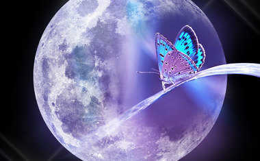 moth and full moon