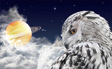 owl looking at saturn