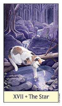 The Star Tarot Card - Cat's Eye Tarot Deck