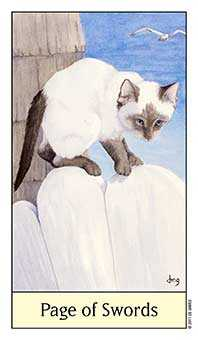 Page of Spades Tarot Card - Cat's Eye Tarot Deck