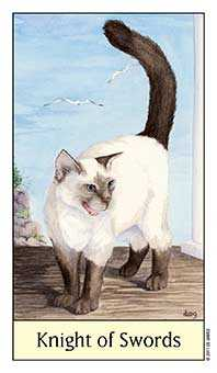 Cavalier of Swords Tarot Card - Cat's Eye Tarot Deck