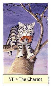 The Chariot Tarot Card - Cat's Eye Tarot Deck
