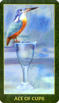 Ace of Cups Tarot Card - Forest Folklore Tarot Deck