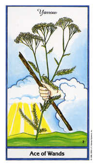 Ace of Sceptres Tarot Card - Herbal Tarot Deck