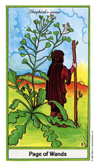 Valet of Batons Tarot Card - Herbal Tarot Deck