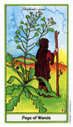 Page of Wands Tarot card in Herbal Tarot deck