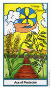 Ace of Coins Tarot card in Herbal deck
