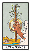 Ace of Wands Tarot card in Modern Witch deck