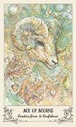 Ace of Acorns Tarot card in Spiritsong deck